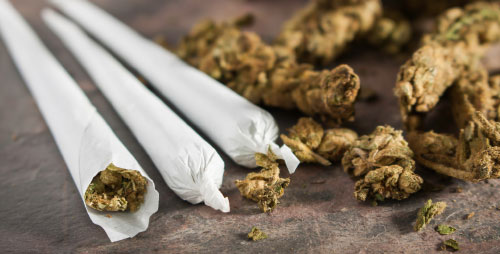Criminal Defense / Marijuana Attorney